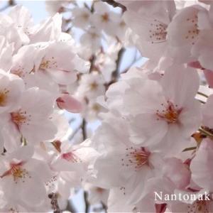 ★近所にお花見散歩 沢山の種類のお花を楽しんでまいりました。