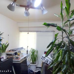 ★壁を漂白すると びっくりすぐるぐらい部屋が明るくなるのです。