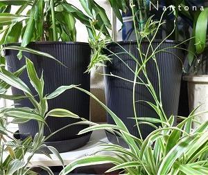 ★良い植木鉢がないのでダイソーのゴミ箱を改造しました。(๑ •̀ ㅂ •́ )و✧