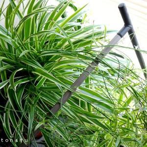 ★インテリアとしての観葉植物は程々が良い【増えすぎると逆にストレス】