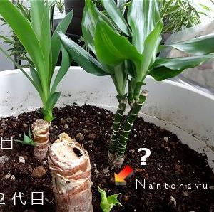★狭い部屋の観葉植物はコンパクトサイズが理想的 ( *´ ︶ `* )