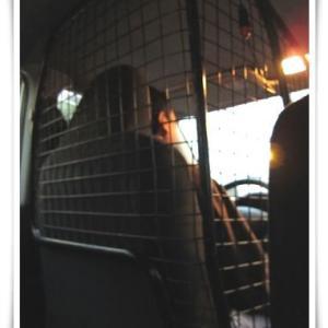 身を守るタクシードライバー