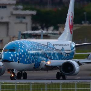 かわいい前足  ジンベエジェット  日本トランスオーシャン航空(NU)