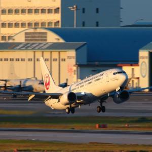 イリオモテヤマネコを連れて  B737  日本トランスオーシャン航空(NU)