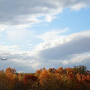 朝一で紅葉を  B767  日本航空(JL)
