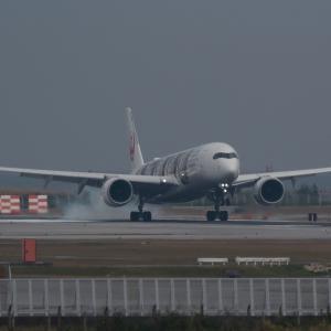 台風じゃなくて  A350  日本航空(JL)