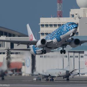 2月の南風  ジンベエジェット  日本トランスオーシャン航空(NU)