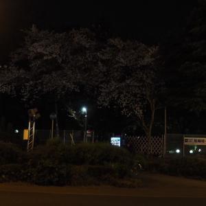 夜桜 2020年3月・4月