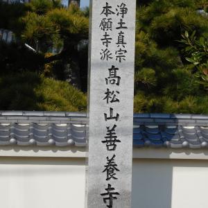 蓮如上人が種を蒔いた菩提樹がある  善養寺