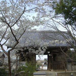 今年は昔の花遍路で堪能しよう 第86番 志度寺