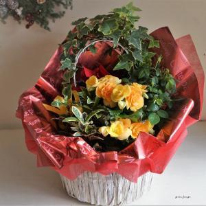 ベゴニアの花かご