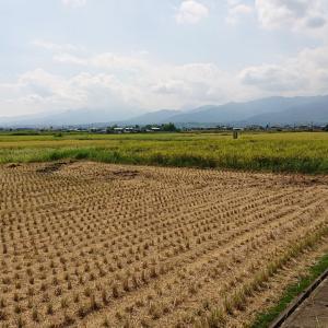 自然の恵みであるお米と。。。