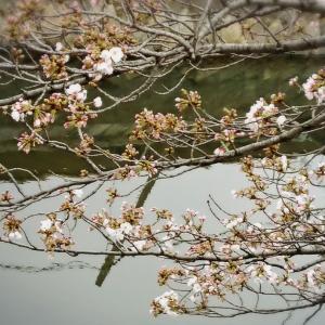 coordinate☆春のカジュアルワンピスタイル~春かごバッグを添えて♥