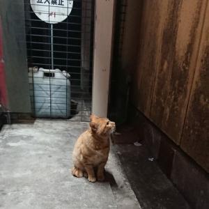 繁華街で泣き叫ぶ猫