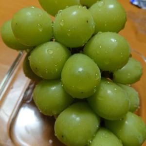 果物の季節