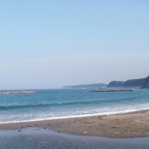 今が旬の岩手県洋野町種市産の天然ホヤ