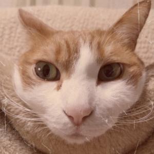 猫便秘VSバイオワンおなかサポート
