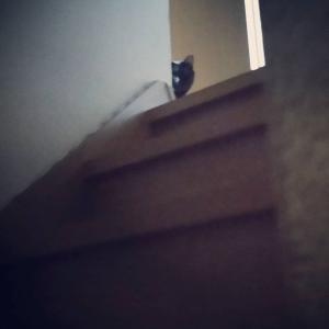 猫は朝起こす