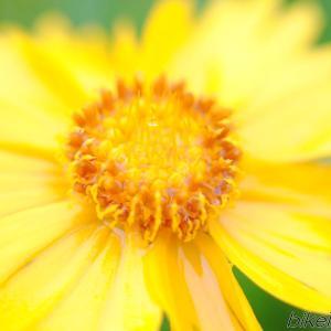 ワイコンのマクロレンズでも花の写真に興味が持てるレベルには撮影が可能
