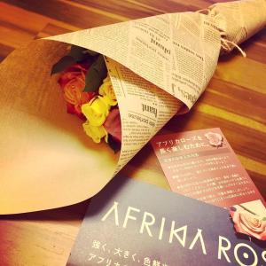 広尾アフリカローズさんのケニアの薔薇と今週からのエステご予約空き状況