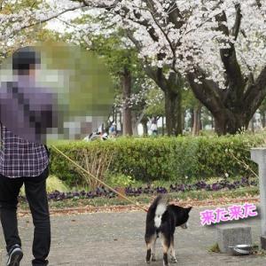 桜さんぽが嬉しいね