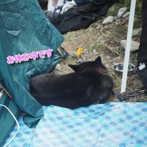 朝はパンにヨーグルトにのキャンプ西丹沢編