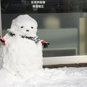雪がこんもり♪キュッキュッキュッ!色んな雪の積もり方