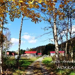 【札幌近郊ドライブ】紅葉の風景と雪虫と田中酒造(小樽)