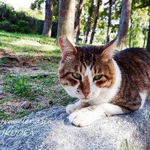 【福岡・東公園】癒し系ぐうたら猫の奔放な日々①