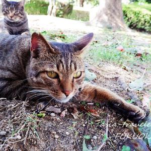 【福岡・東公園】癒し系ぐうたら猫の奔放な日々② 餌やり編