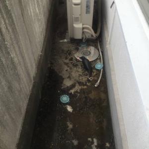 ベランダの鳩の糞掃除&鳩除け…大阪・寝屋川市の遺品整理士/便利屋銀さん