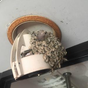 スズメの巣撤去…大阪・寝屋川市の遺品整理士/便利屋銀さん