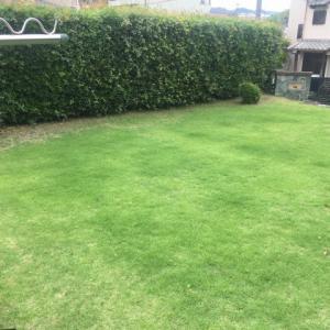寝屋川市に庭の芝を刈りに行って来ました…大阪・寝屋川市の遺品整理士/便利屋銀さん