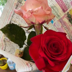 薔薇頂きました!