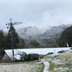 初雪そして最後の雪