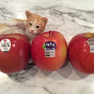 リンゴ食べ比べ
