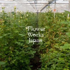 広島の神田バラ園さんへ視察研修へ行ってきました【フラワーアレンジメント教室 西宮市】
