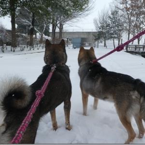2020*冬旅☆信州♪ 09 雪遊びと♪ ランチとりんご☆