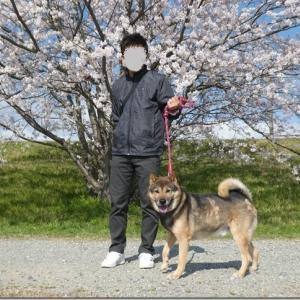 ちょっと そこまで! 桜散歩♪ 2020 前編。
