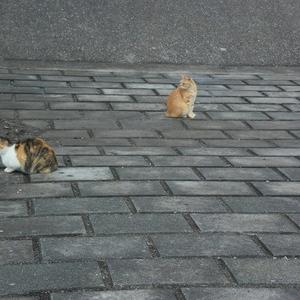 ネコちゃん達