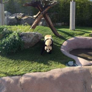 今日はパンダの日