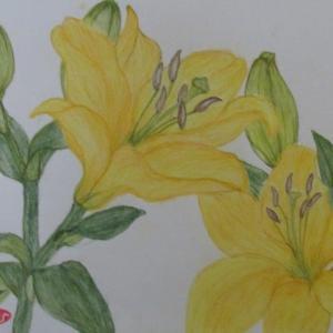 スカシユリ(黄色)