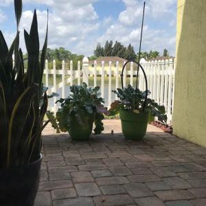 フロリダのスズメとイグアナ