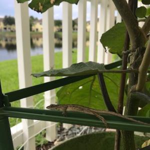 ここはフロリダ~今日の裏庭の野生動物たち