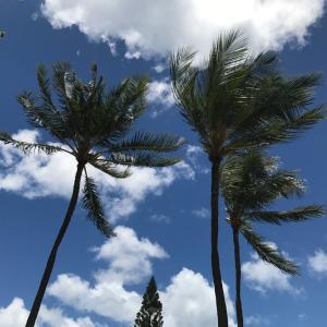 ハワイのコロナ感染者状況