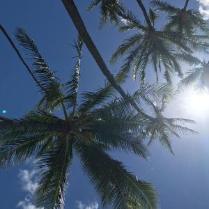 ハワイのこの光景が懐かしい〜