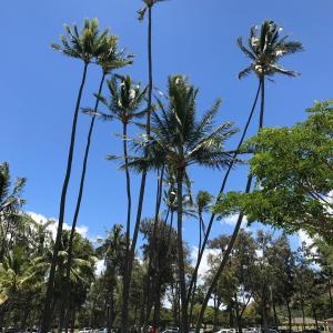 ★ハワイの風景、いつ見られるのかなぁ〜?