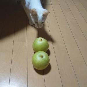 花田の梨。