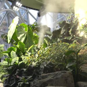 これから大流行の予感!Amazonに学ぶアウトドアリビングと屋上緑化計画|大人の高級マンション