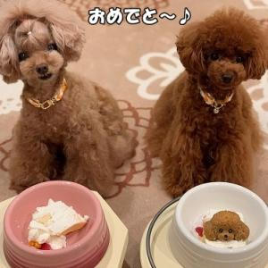 ケーキ 実食♪